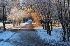 Хмурая осень, Стоковое фото RF