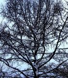 хмурое дерево и зимний день стоковое фото rf