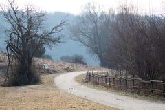 Хмурый путь в природе стоковое изображение rf