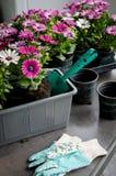 Хобби садовничая на балконе Стоковое фото RF