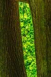 2 хобота с зеленым цветом между ими Стоковое Изображение