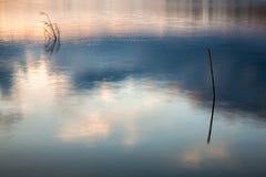 Хоботы в озере воды с отражениями неба стоковые изображения