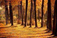 Хоботы деревьев осени Стоковые Фотографии RF