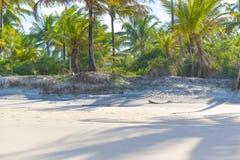 Хоботы кокосовой пальмы на день пляжа Стоковая Фотография RF