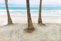 Хоботы кокосовой пальмы на день пляжа Стоковое Изображение