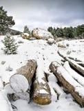 хоботы снежка Стоковые Изображения