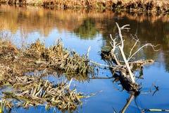 Хобот высушенного дерева лежит в воде Стоковая Фотография RF