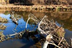 Хобот высушенного дерева лежит в воде Стоковое Изображение