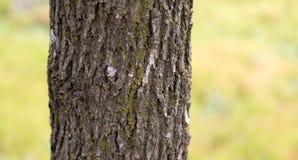 Хобот дерева в парке на природе Стоковое Изображение RF