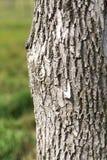 Хобот дерева в парке на природе Стоковое фото RF