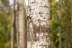 Хобот дерева в парке на природе Стоковое Фото
