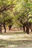 Хобот дерева в парке на природе Стоковые Изображения