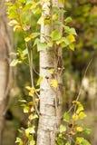 Хобот дерева в парке на природе Стоковая Фотография RF