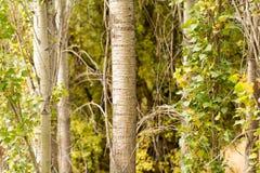 Хобот дерева в парке на природе Стоковая Фотография