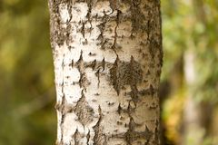 Хобот дерева в парке на природе Стоковые Фотографии RF