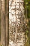 Хобот дерева в парке на природе Стоковое Изображение