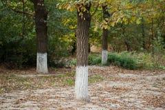 Хобот дерева в природе Стоковое Изображение RF
