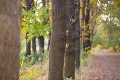 Хобот дерева в природе Стоковые Фото
