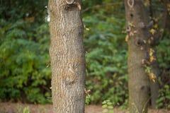 Хобот дерева в природе Стоковое фото RF