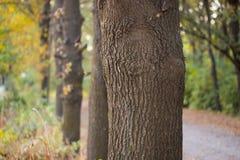 Хобот дерева в природе Стоковая Фотография RF