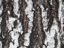 Хобот дерева березы Расшива березы текстурированная предпосылка Стоковая Фотография RF