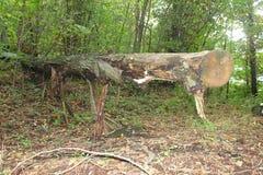 Хобот дерева в лесе Стоковое Фото