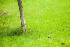 Хобот дерева на поле травы Стоковое Изображение RF