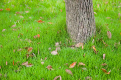 Хобот дерева на поле травы Стоковые Фотографии RF