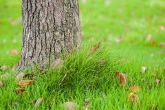 Хобот дерева на поле травы Стоковые Изображения RF