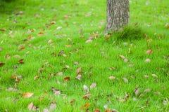 Хобот дерева на поле травы Стоковая Фотография RF