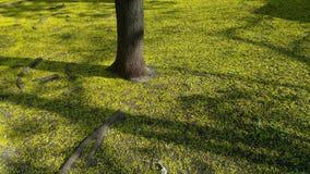 Хобот дерева на поле Стоковые Фото