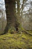 Хобот дерева древесиной Wath стоковое изображение rf