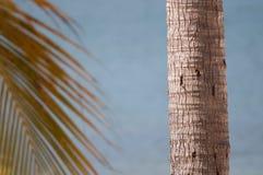 Хобот и ветвь пальмы Стоковое Изображение RF
