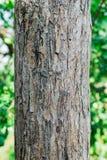 Хобот и расшива взрослого дерева Яблока текстурированная предпосылка Стоковое Изображение RF