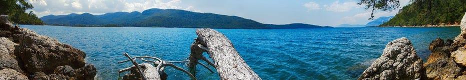 Хобот молотилки моря упаденный в дерево воды стоковое фото rf