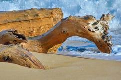 Хобот на береге моря Стоковое Фото