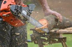 Хобот на зеленой траве которой режет woodcutter с увидел с Стоковые Фото
