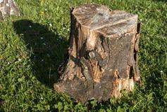 Хобот на луге травы Стоковое Изображение