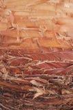 хобот пальмы, оранжевой текстуры яркая и желтой коричневая древесина и подрезанные вырезывания деревянные, пальмы листьев отрезал стоковая фотография