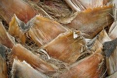 хобот пальмы предпосылки Стоковые Изображения