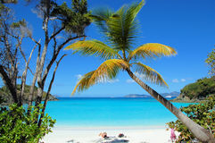 хобот пляжа Стоковое фото RF