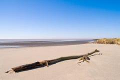 хобот пляжа Стоковое Изображение RF