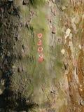 Хобот с красными номерами стоковая фотография rf