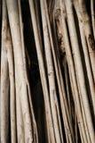 хобот Стоковая Фотография RF