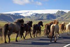 ход дороги лошадей icelandic стоковое изображение