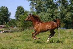 ход лошади Стоковая Фотография RF