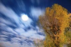 ход луны Стоковые Изображения
