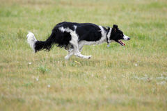ход собаки стоковые фотографии rf