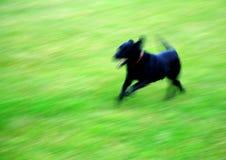 ход собаки Стоковое фото RF