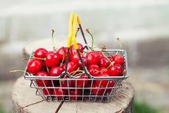 Хозяйственная сумка вполне зрелых красных клубник Сбор лета на предпосылке пня дерева, поле малой глубины, селективном Стоковое Изображение RF